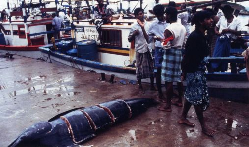 Dans les filets sri-lankais