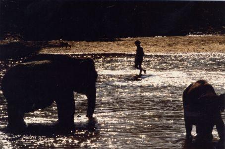 The mastodont's nursury